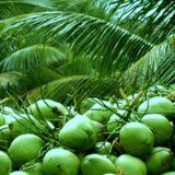 Kokosovo olje ima koristne maščobe