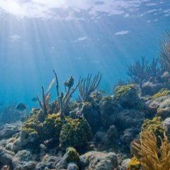 Nasveti pri nakupu podvodne kamere
