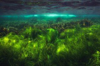 Naravni magnezij iz morske trave